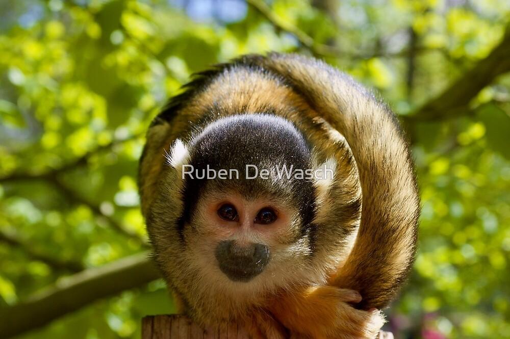 Monkey by Ruben De Wasch