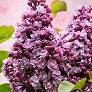 Lilacs - Textured by Susie Peek
