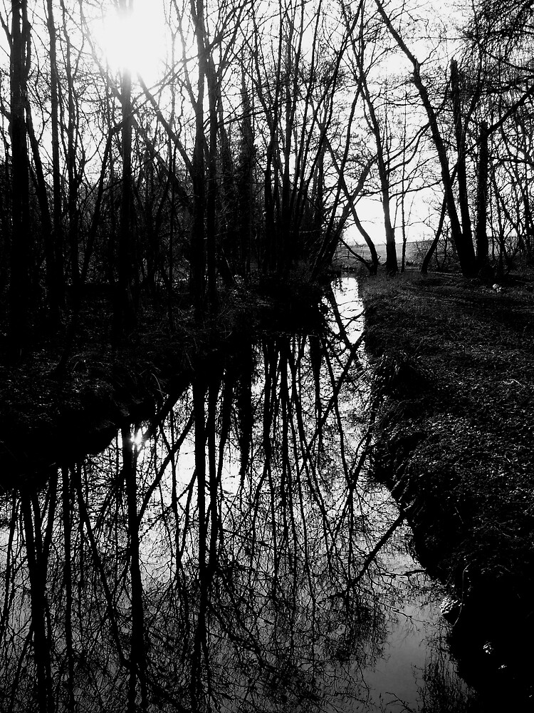 river reflection by Caroline Cage