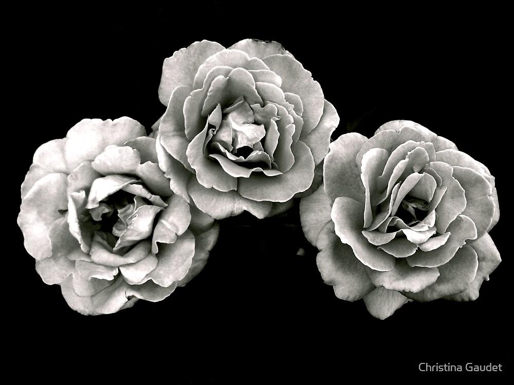 Trio by Christina Gaudet