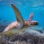 Swimming with Turtles by Steve Bass