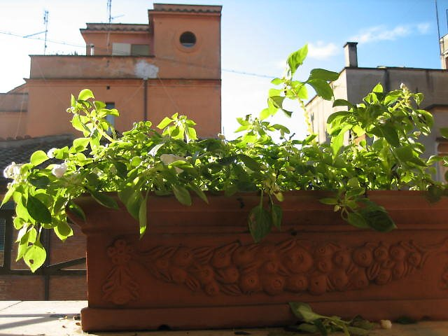 Italy's everyday flower pot by Marichelle