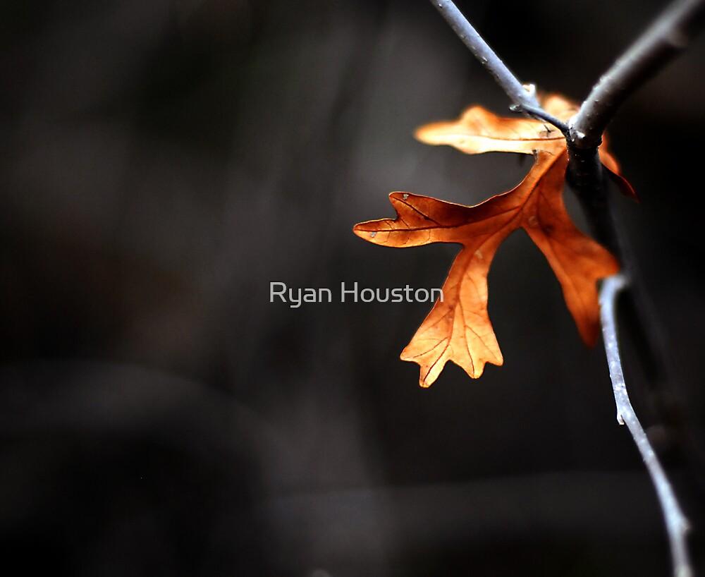 Oak Leaf by Ryan Houston