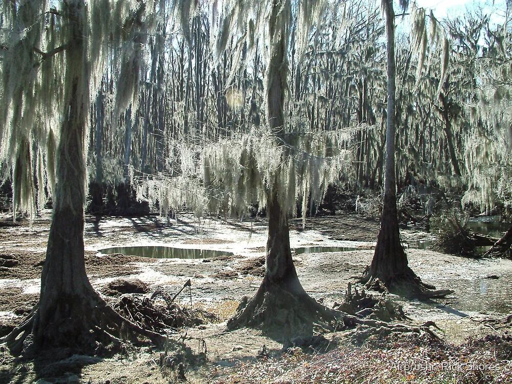 swamp by Airbrushr  Rick Shores