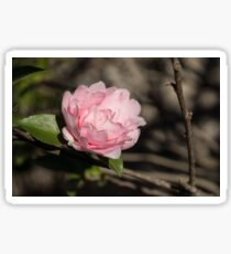 January Jewel - Solo Camellia in Soft Baby Pink  Sticker