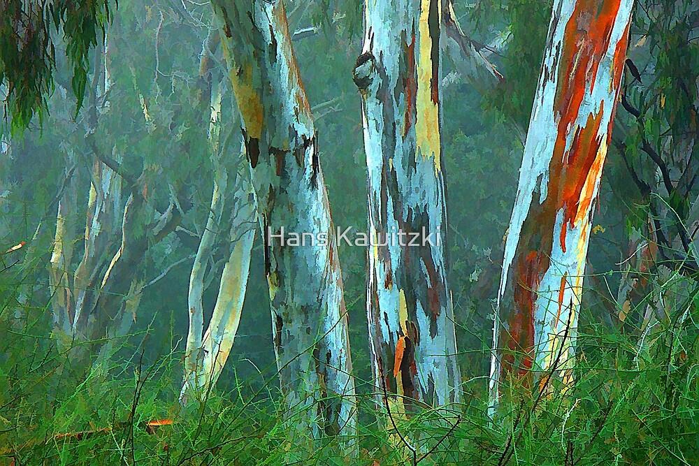 1488 Gum Trees in Fog by Hans Kawitzki