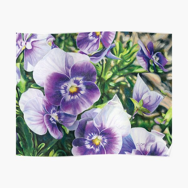 Purple and White Pansies Poster