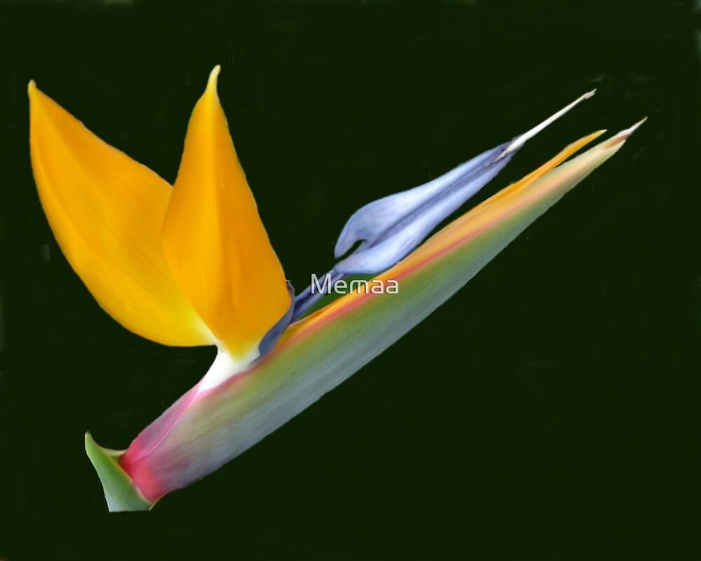 Bird Of Paradise by Memaa