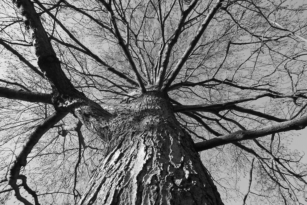 The tree with no name by Monster