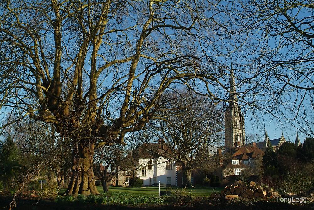 salisbury cathedral by TonyLegg