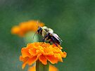 Busy Bee by FrankieCat