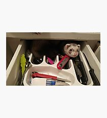 sneaky ferret Photographic Print