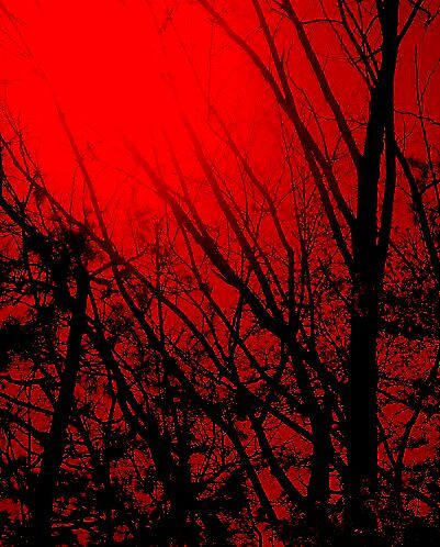 Fire in the Branches by Valerius
