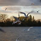 Gulls at Sunset by babibell