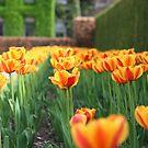 spring chorus by debfaraday