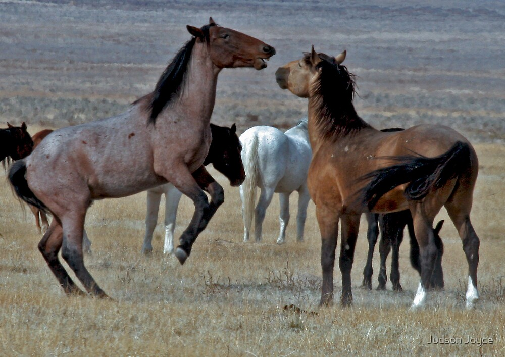 Playful Mustangs by Judson Joyce
