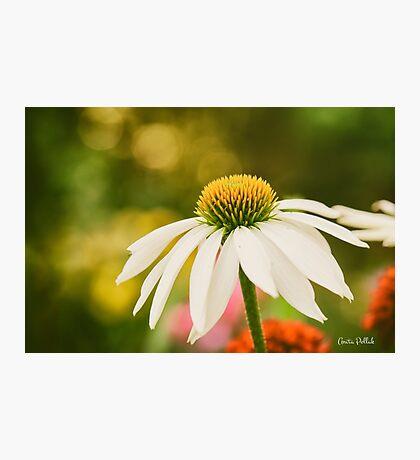 Summer Sunshine Photographic Print