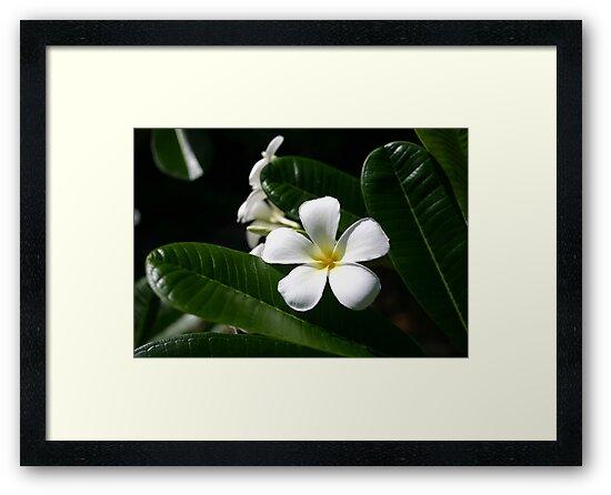 Tropical Flower by MMerritt