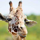 Giraffe Smile by Tamara  Kaylor
