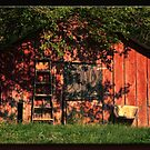 The Little Red Shed by Sheryl Gerhard