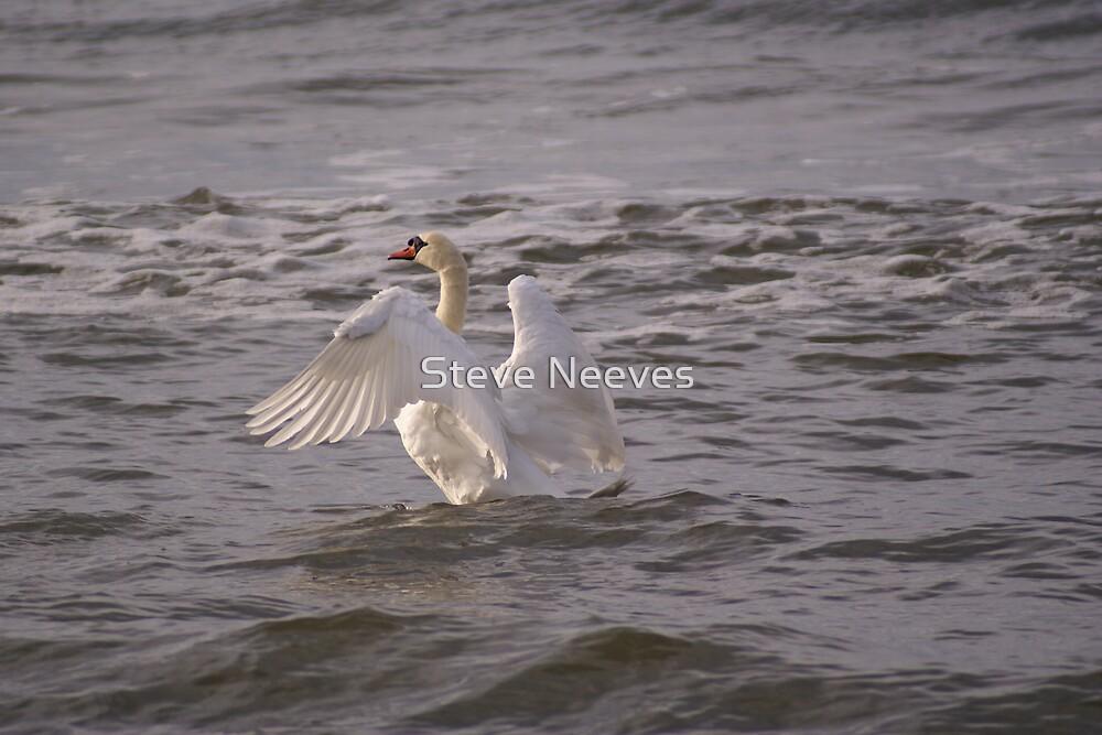 lord swan by Steve Neeves
