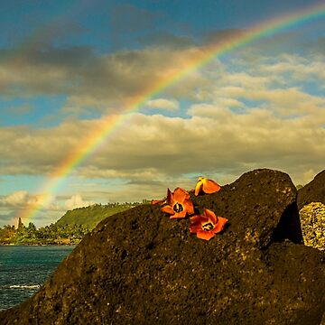 Hawaii Rainbows and Hau Blossoms by redmahan