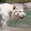 White Tiger by GabrielK