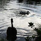 Evening at Taitua Arboretum by avionz