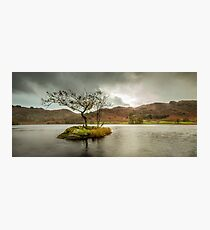 Lone Tree Rydal Water Lake District Photographic Print