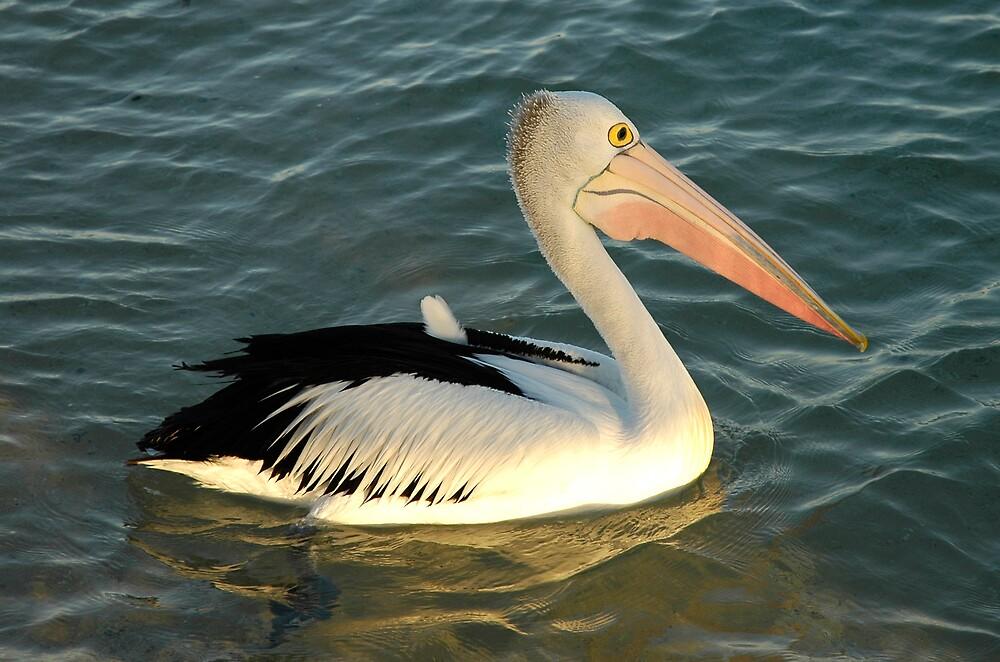 Pelican at Monkey Mia by Kath Bowman