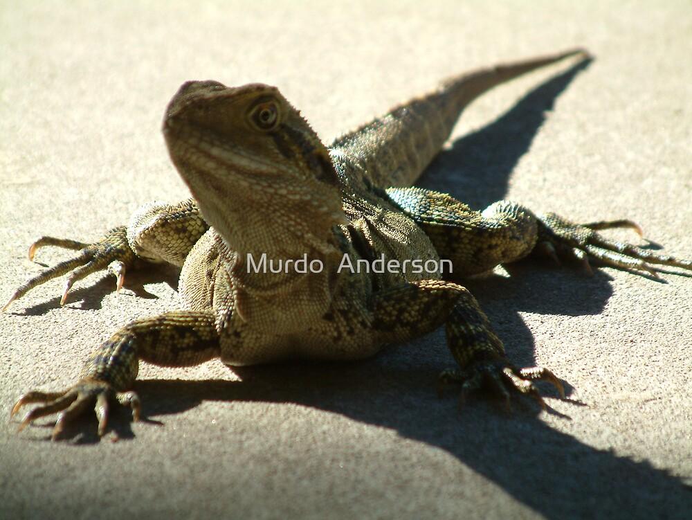 Lizard, Friendly? by Murdo  Anderson