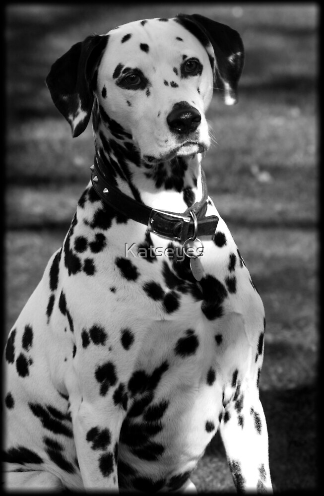 BLACK AND WHITE DOG by Katseyes