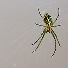 Mable Orchard Spider by Otto Danby II