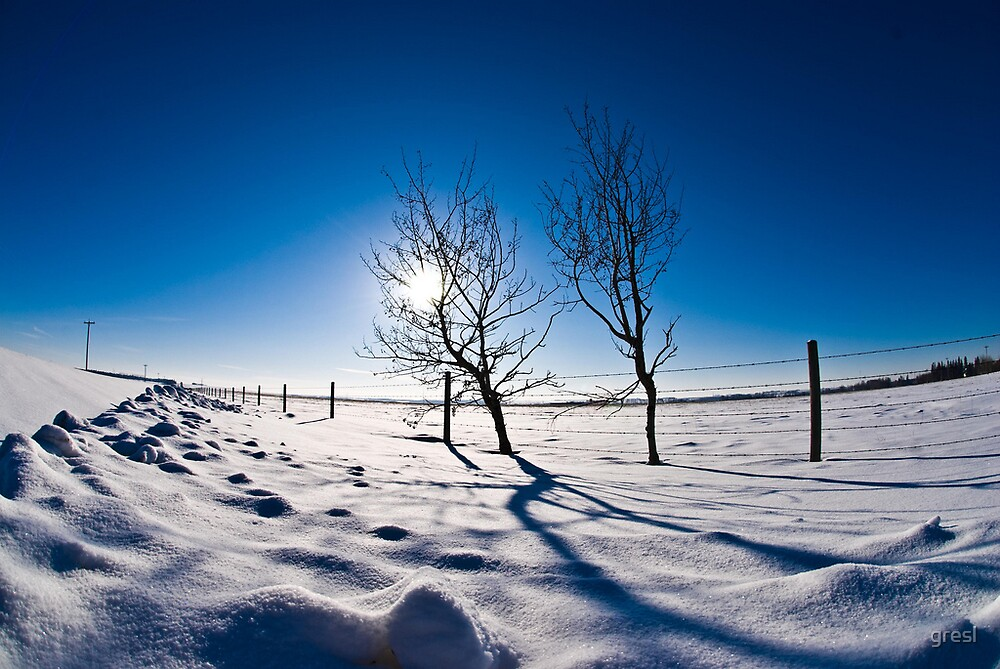 Alberta Winter Morning by gresl