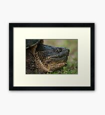 Snapper Framed Print