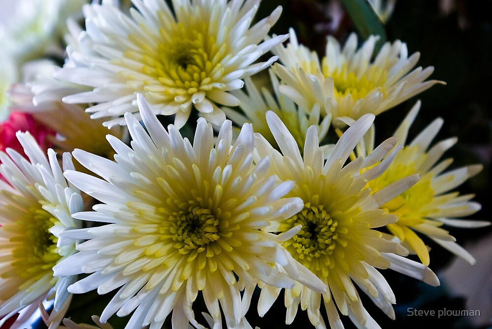 White and yellow by Steve plowman