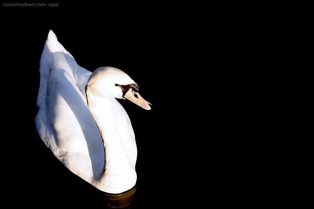 Swan at Dawn by SebastienGenet
