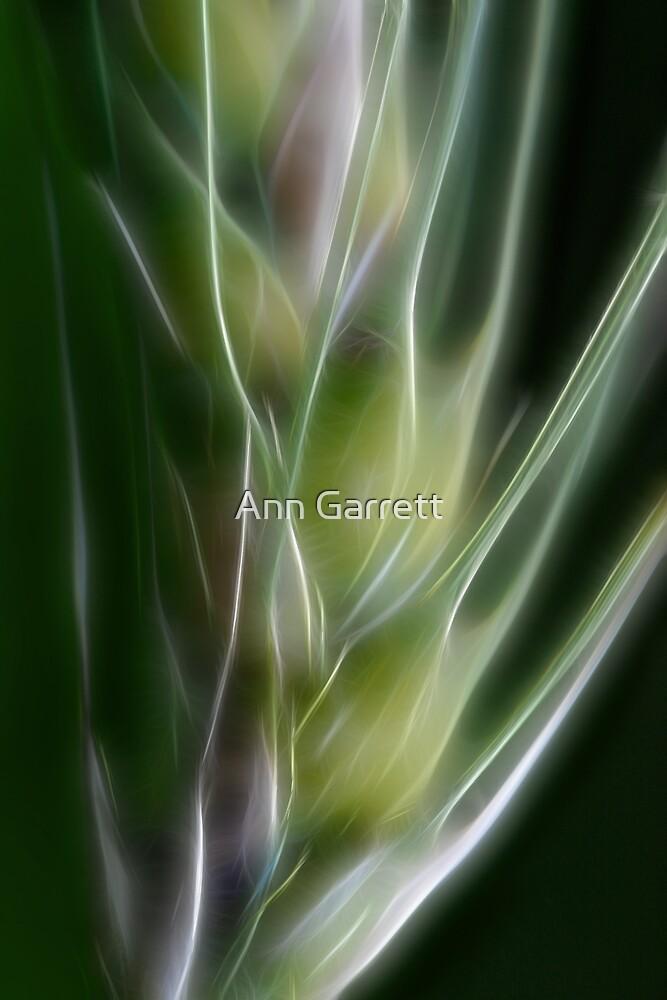 Fractal Grass Seedhead by Ann Garrett