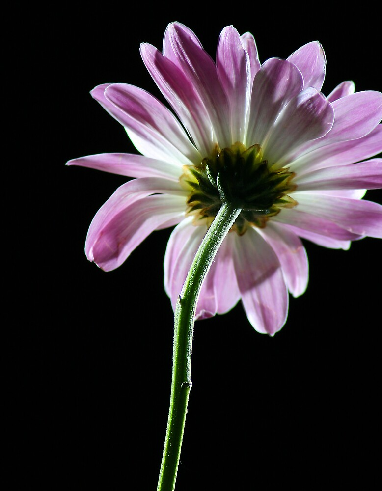 time exposed flower by rutger