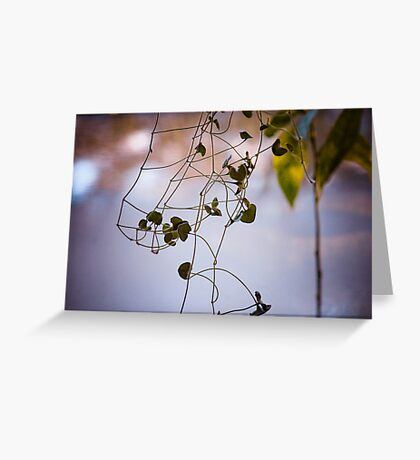 Hanging from the flower pot  Greeting Card