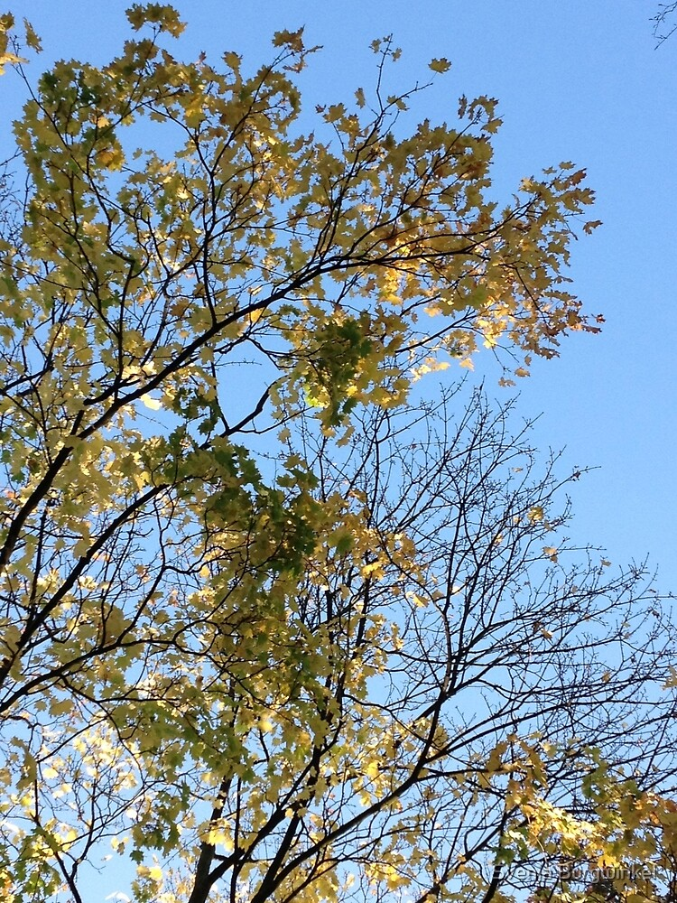 Tree blue sunny green by Svenja Burgwinkel