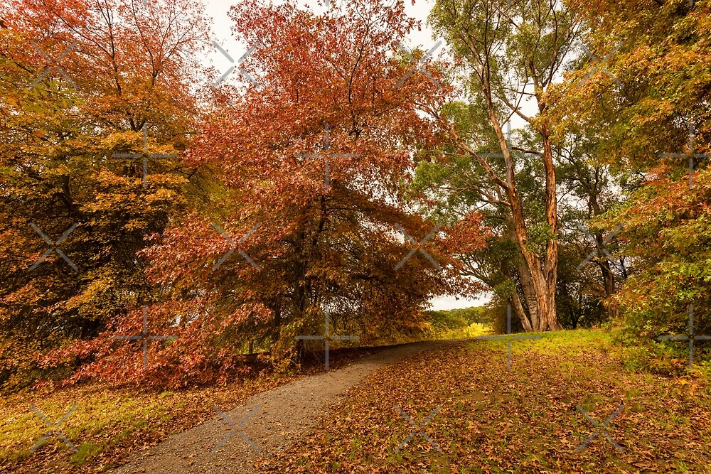 Autumn Forest by SusanAdey