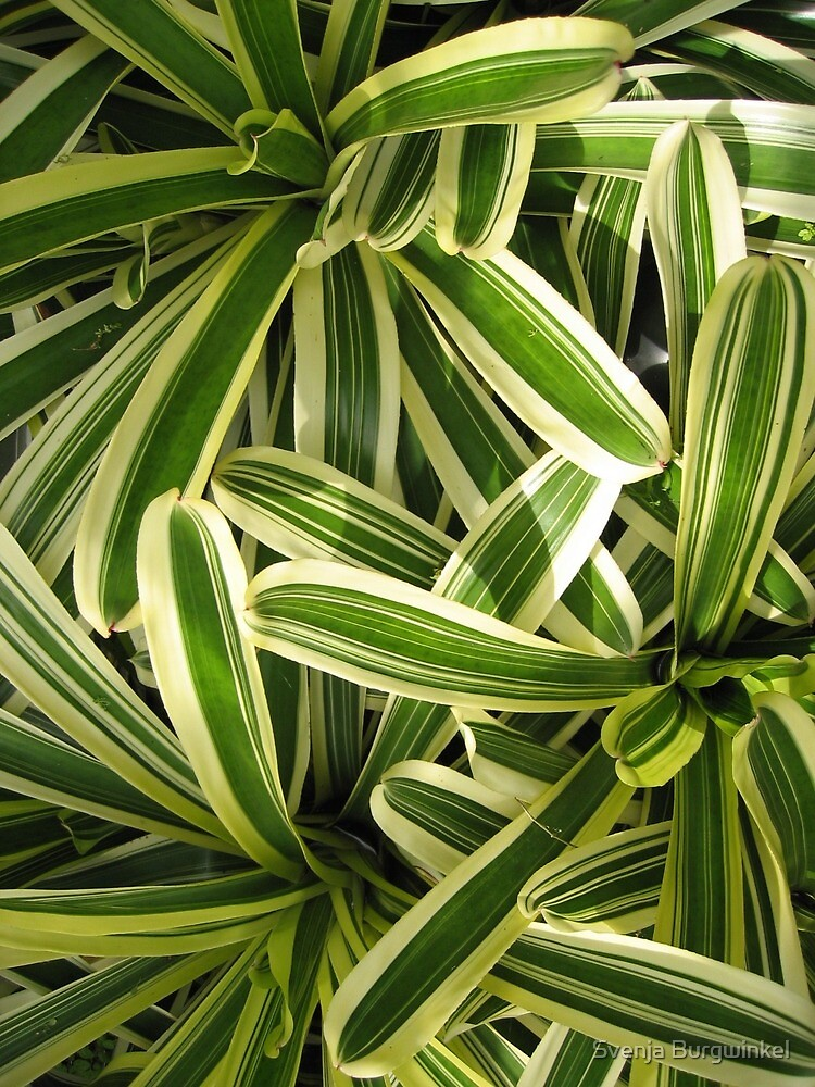 Nature green white leaves by Svenja Burgwinkel