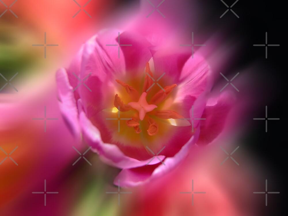 Blur Tulips by EventHorizon