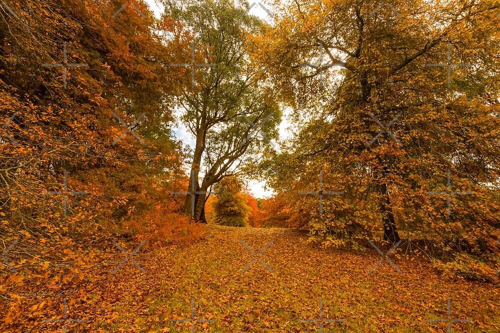 Autumn Splendour by SusanAdey