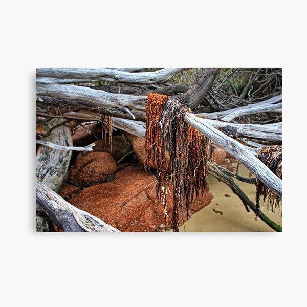 Freycinet National Park - seaweed. Canvas Print