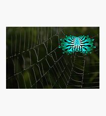 A Creepy Abstract Spider on It's Web Photographic Print