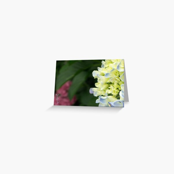 Budding Hydrangeas Greeting Card