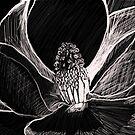 magnolia by Juana Luján