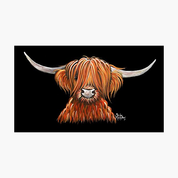 Scottish Hairy Highland Cow ' HARLEY 2 ' by Shirley MacArthur Photographic Print